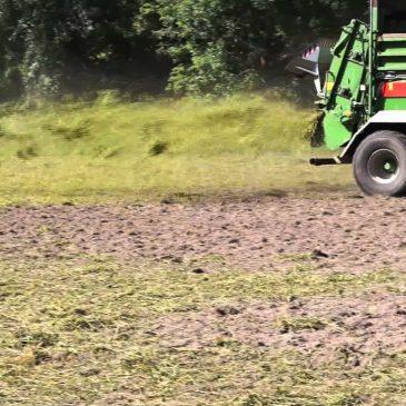 Etablir une prairie naturelle par la méthode « fleur de foin »
