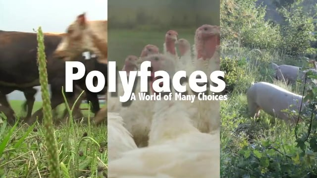 Polyfaces, Une ferme innovante aux Etats Unis.