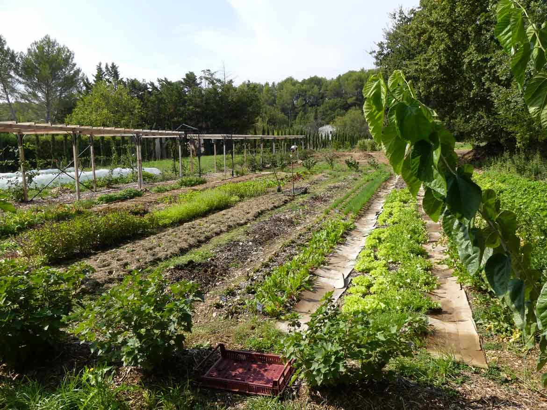 Le grand potager l t au jardin transjardins for Au jardin potager