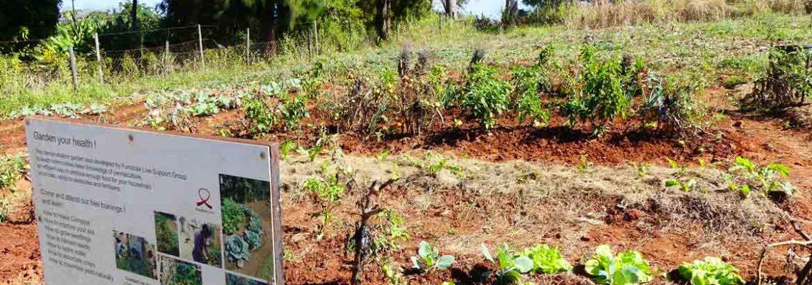 Swaziland – Jardin pédagogique de Hlohlo