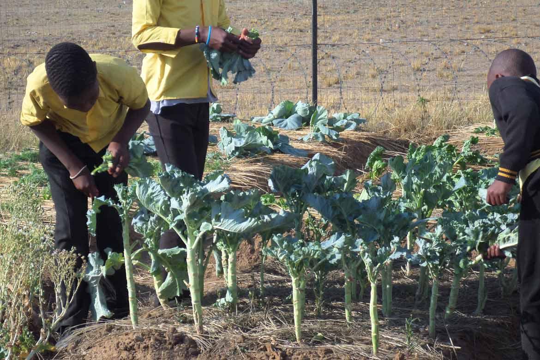 Entretien du jardin roosboom afrique du sud transjardins for Entretien jardin 02