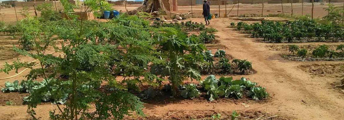 Un jardin fleurissant au Burkina Faso