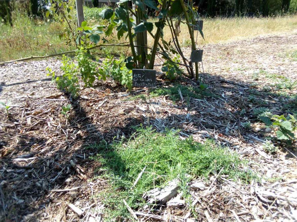Plante Couvre Sol Soleil couvre sol – transjardins